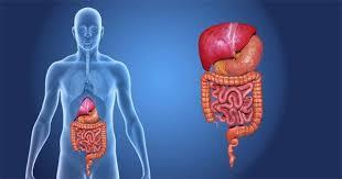 Course Image Malattie dell'apparato digerente
