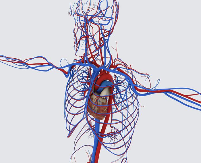 Course Image Malattie dell'apparato cardiovascolare