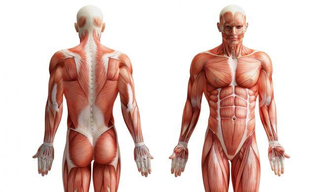 Course Image Anatomia e fisiologia 2017-2018